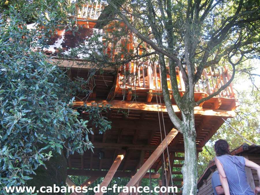 Cabane arbre marais poitevin