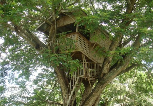 Cabane arbre saone et loire