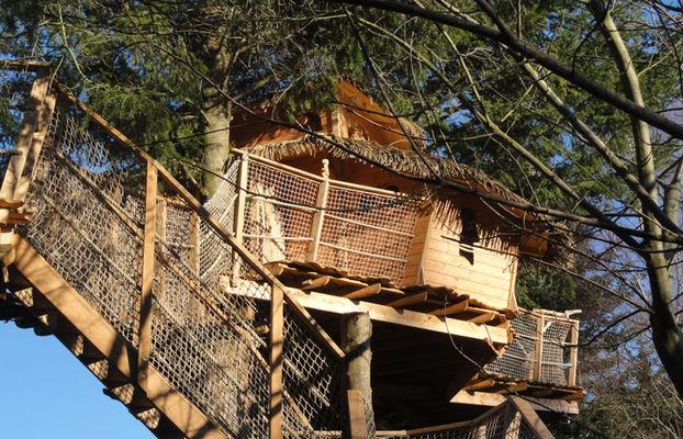 Cabane arbre paimpol